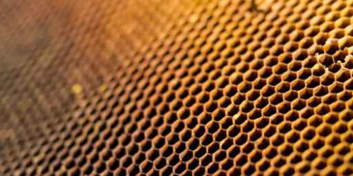 Honeycomb cells closeup from beehive